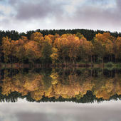 Beautiful vibrant Autumn woodland reflecions in calm lake waters — Foto Stock