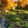 Stunning vibrant Autumn landscape of waterfall conceptual book i — Stock Photo #55996213