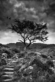 Solitary tree on mountain and footpath landscape in monochrome — Stock Photo