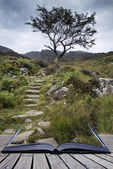 Solitary tree on mountain and footpath landscape in Summer conce — Stock Photo