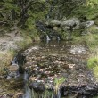 Waterfall long exposure landscape image in Summer in forest sett — Stock Photo #57628795