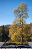 Trees and main lake in Stourhead Gardens during Autumn conceptua — Stock Photo