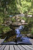 Beautiful stream flowing through forest landscape in Summer conc — Stock Photo