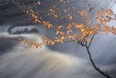 Autumn Fall forest landscape stream flowing through golden vibra — Stock Photo