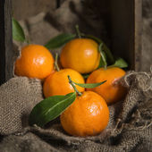 Oranges on stalk in rustic kitchen setting with old wooden box a — Stock Photo