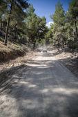 Off roading on road through dense foliage on Mediteranean island — Stock Photo
