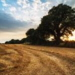 rurale landschap foto van zomer zonsondergang over veld van de hooibalen — Stockfoto #67470905