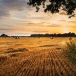 乡村景观形象的干草堆的域上的夏天日落景色 — 图库照片 #67471105