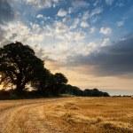 乡村景观形象的干草堆的域上的夏天日落景色 — 图库照片 #68038875