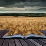 Stunning wheat field landscape under Summer stormy sunset sky co — Stock Photo #68820787