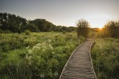 Footpath leading through wild meadow sunrise landscape in Summer — Stock Photo