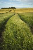 Summer landscape over agricultural farm field of crops in late a — Stock Photo