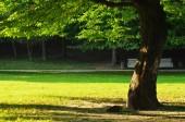 árbol en el parque — Foto de Stock