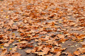 Dry leaves on grey road — Stockfoto