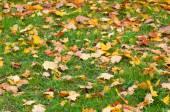 Landscape with fallen leaves — Foto de Stock