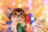 Smiling kitten — Stock Photo