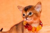 Elegant kitten — Stock Photo