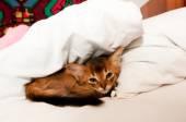 Cute little kitten in bed — Stock Photo
