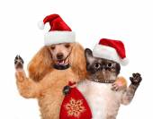 Cat and dog in red Christmas hats. — Stock Photo