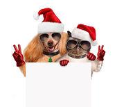 собака и кошка мира пальцами в красные шляпы рождество — Стоковое фото