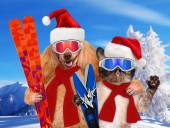 Cat and dog in red Christmas hats with skis — Stock Photo