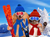 Dog with a cat with skis — Stock Photo