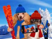 Cat and dog hats taking a selfie together with a smartphone — Stock Photo