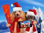 Cat and dog taking a selfie together with a smartphone — Stock Photo
