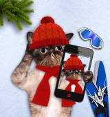 Gato tomando un selfie con un smartphone. — Foto de Stock