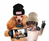 Dog with cat taking a selfie together with a smartphone — Stock Photo