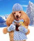 Dog holding in the paws of mulled wine. — Stock Photo