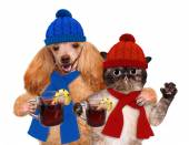 Dog with a cat, holding in the paws of mulled wine. — Stock Photo