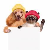 Pes s kočkou v jeho tlapky bílý nápis. — Stock fotografie