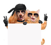 Dog and cat with peace fingers in black leather gloves — Stock Photo