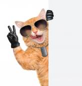 Cat with peace fingers in black leather — Stock Photo