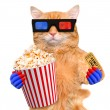 Cat watching a movie — Stock Photo #73679663