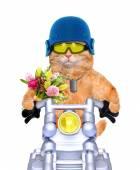 Gato de motocicleta. — Fotografia Stock