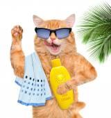 Cat with sunblock. — Stock Photo