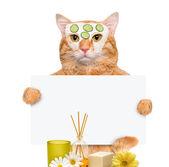 Spa wash cat — Stock Photo