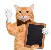 Cat chef. — Stock Photo