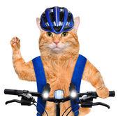 Ciclista de gato. — Foto de Stock