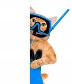Δύτης γάτα猫潜水员. — 图库照片