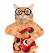 Cat talking on the phone. — Stock fotografie