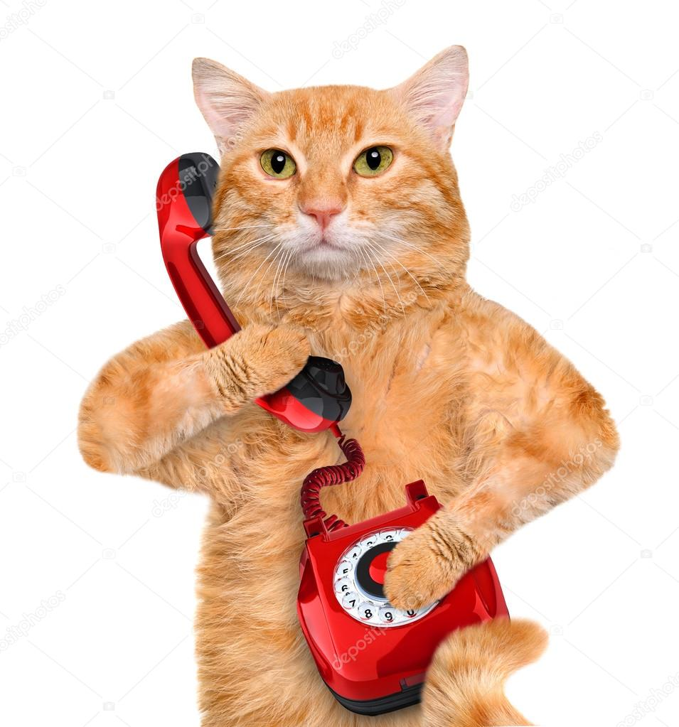 prata på telefon