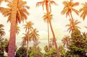 Coconut palm trees against blue sky — Stock Photo