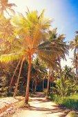 Coconut palm trees — Stock Photo