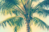 Coconut palm trees perspective view — Stock Photo