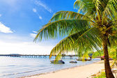 Palm tree in tropical perfect beach at Phuket — Stock Photo