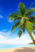 Tropical white sand with palm tree — Stock Photo
