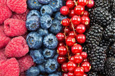Different fresh berries as background — Stock Photo